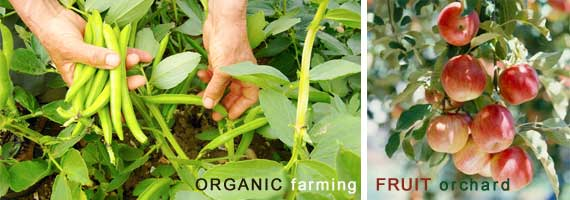 home_organic-farming-fruit.jpg